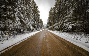 Picture winter, road, forest, nature