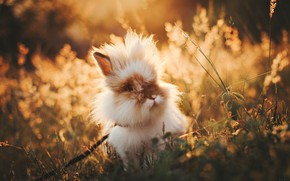 Picture nature, rabbit, funny