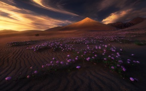 Picture clouds, light, flowers, mountains, nature, desert, dunes
