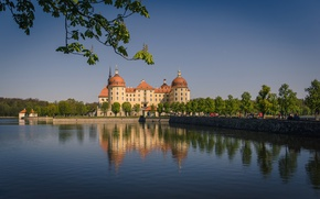 Picture water, branches, reflection, castle, Germany, Germany, Saxony, Moritzburg, Saxony, Moritzburg Castle, Moritzburg Castle, Moritzburg
