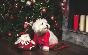 Picture toys, tree, dog, New Year, Christmas, Christmas, dog, 2018, Merry Christmas, Xmas, funny, cute, decoration, …