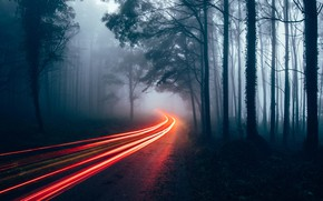 Wallpaper excerpt, forest, road, fog, light, haze, lights