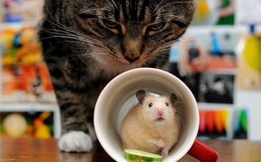 Picture cat, cat, the situation, hamster, ambush, mug, rodent