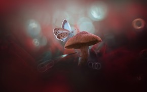 Picture macro, butterfly, mushroom, bokeh, mushroom