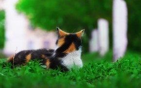 Picture greens, cat, background, weed