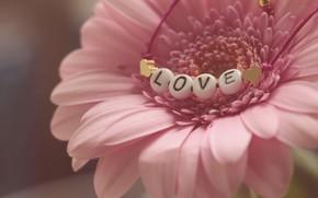 Picture flower, beads, love, Gerbera