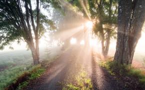 Picture road, summer, light, fog, morning