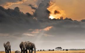 Wallpaper clouds, the sky, the sun, field, the herd, Savannah, Africa, elephants