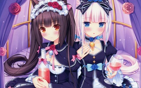 Picture glass, bottle, blue eyes, bow, ears, long hair, friend, roses, ruffles, Sayori, Vanilla, Chocola, Anything …
