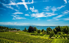 Picture greens, the sky, the sun, clouds, trees, lake, yachts, Germany, plantation, Lake Constance, Hagnau