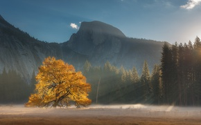 Picture forest, light, mountains, tree, USA