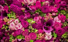 Wallpaper flowers, roses, pink, buds, pink, flowers, beautiful, romantic, purple, roses