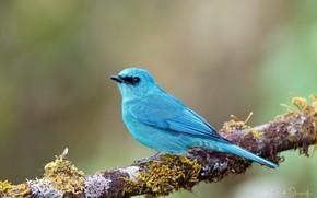 Picture blue, bird, branch, bright