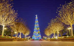 Picture Lights, Night, Trees, Park, Disneyland, Alley