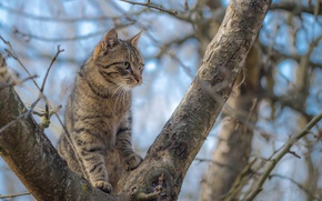 Picture cat, branches, tree