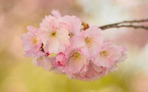 Picture flowers, branch, spring, garden