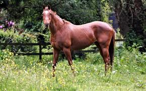 Picture nature, horse, horse