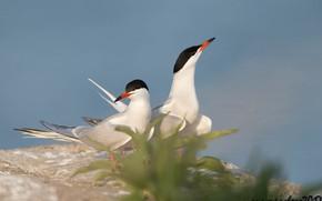 Picture birds, legs, beak, pair, white