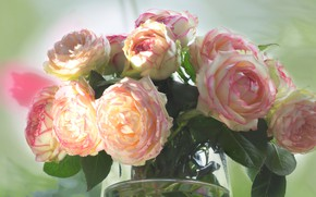 Picture glass, leaves, background, roses, bouquet, light, vase, gentle, pink, buds, lush