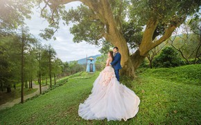 Picture girl, love, tree, Nature, Pair, guy, wedding, the couple