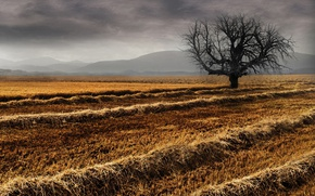 Picture field, nature, tree, hay