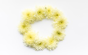 Picture flowers, round, yellow, yellow, from, daisies, decor, Daisy, Circle