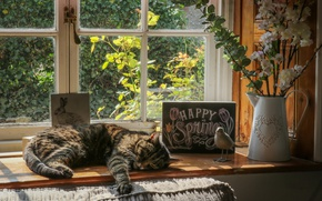 Wallpaper cat, sill, resting, window, lies, flowers, cat, vase