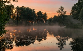Picture fog, pond, dawn, morning