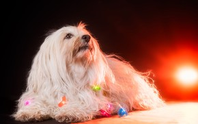 Picture light, house, dog