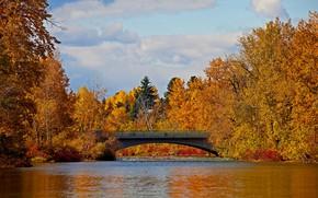 Picture autumn, trees, bridge, Canada, Albert, the Elbow river