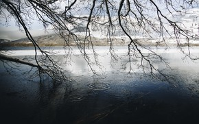Picture winter, branches, river