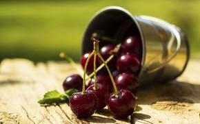 Picture macro, berries, sweet, cherry, juicy, bucket