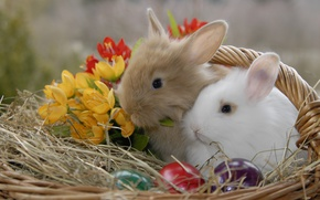Picture animals, flowers, basket, eggs, Easter, rabbits, straw, eggs