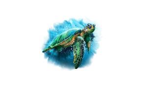 Picture sea, turtle, head, neck