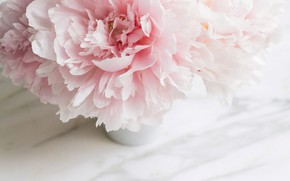Wallpaper flowers, bouquet, marble, pink, flowers, peonies, peonies, tender, marble