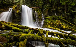 Picture forest, waterfall, moss, Oregon, cascade, Oregon, logs, Upper Downing Creek Falls