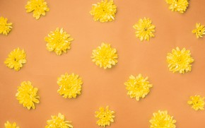Picture flowers, background, yellow, buds, yellow, flowers, orange