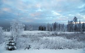 Picture cold, winter, snow, nature