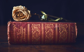 Picture background, rose, book