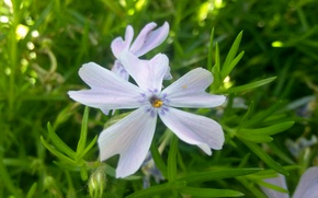 Picture nature, petals, Flower