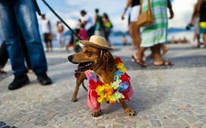 Picture beach, hat, Dachshund, carnival, Brazil, Rio de Janeiro, Copacabana