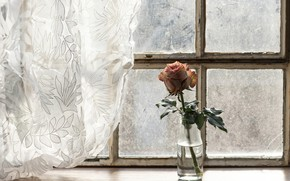 Picture flower, rose, window, curtains