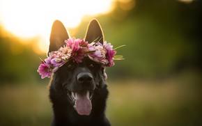Wallpaper flowers, each, dog