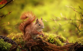 Wallpaper animal, animal, nature, rodent, protein, moss, bump, snag, branches