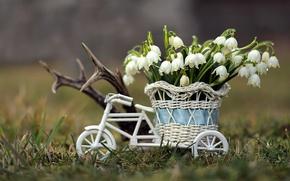 Picture basket, primrose, snowflake