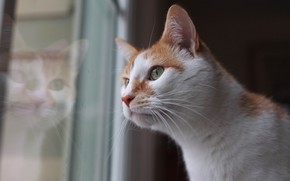 Picture eyes, window, cat