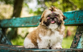 Picture language, bench, nature, Park, background, dog, shop, hairstyle, puppy, face, sitting, dog, bokeh, tails, decorative, …