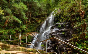 Picture forest, trees, rock, stones, waterfall, trail, Australia, railings, Sydney, Blue Mountains, Sylvia if