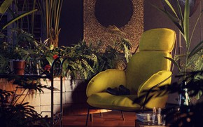 Picture flowers, furniture, interior, the room, Tropics of yore
