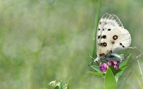 Picture summer, grass, macro, flowers, nature, butterfly, bokeh